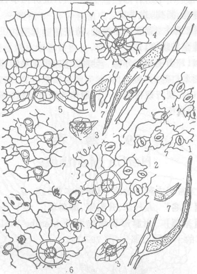 简笔画 设计 矢量 矢量图 手绘 素材 线稿 685_951 竖版 竖屏